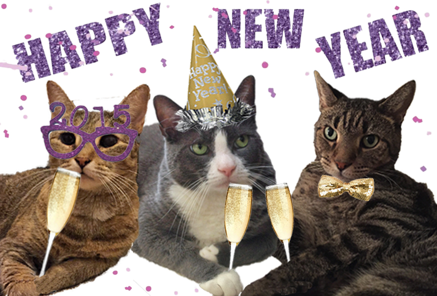 cats celebrating new years
