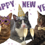 cats ringing in the new year