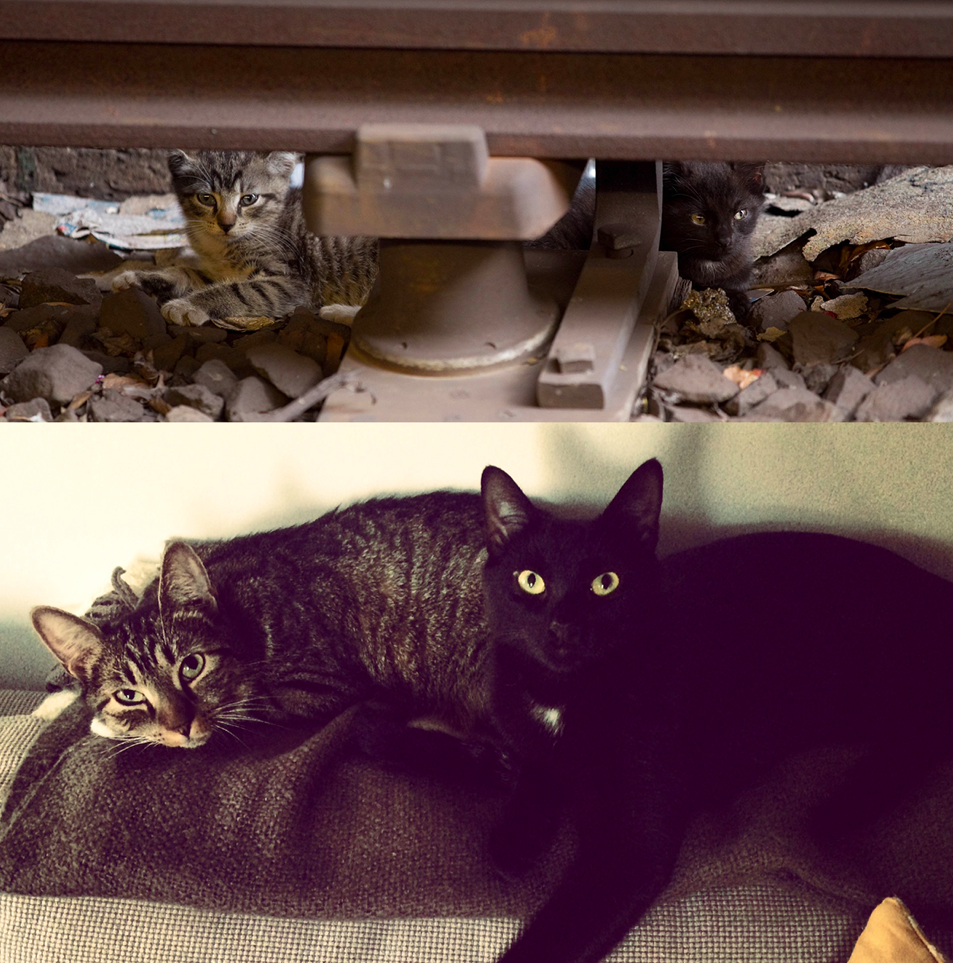 New York City Subway Kittens