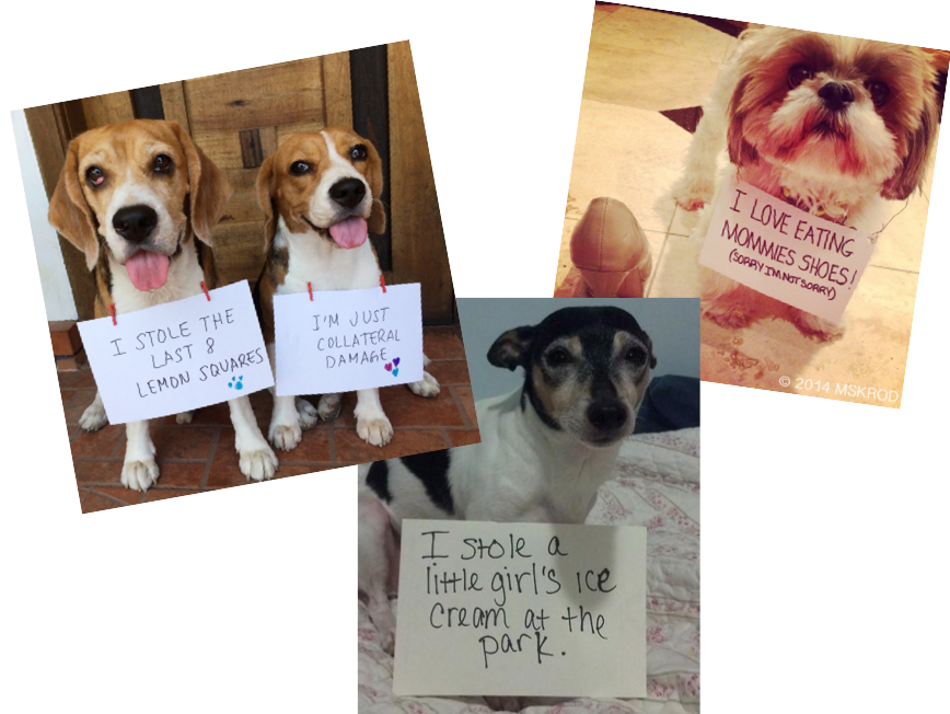 food related dog shaming