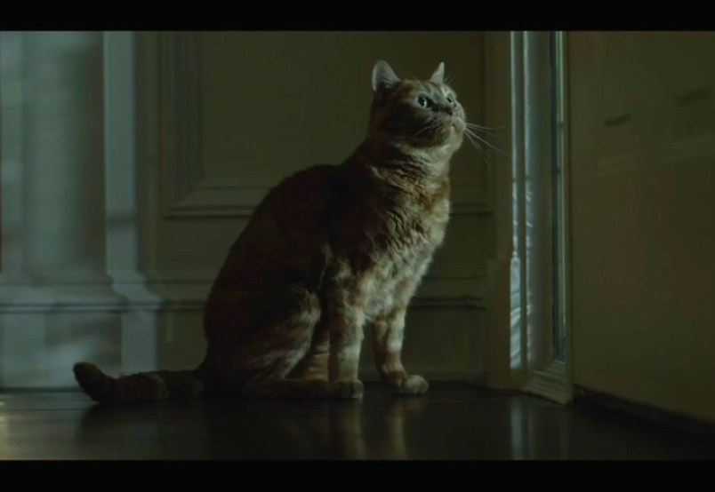 Boris the cat played Bleeker in GONE GIRL