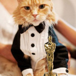 Their time has come for cat actors and their trainers to be recognized.