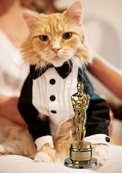 The Oscar For Best Cat Actor Cator Goes To I Have Cat