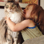 A boy and Maine Coon are best friends growing up together