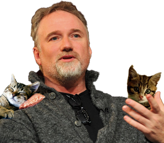 David Fincher Loves Cats is a cayman
