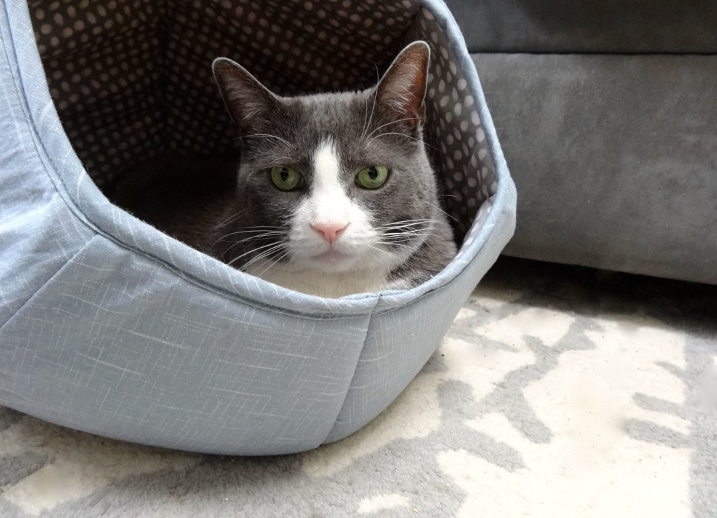 My cat loves his cat ball bed