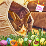 Easter Cat Bunny in an Easter Egg bed