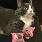 Polydactyl Cat catnip toys made in the USA