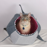 shark cat ball
