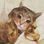 make-up app used on pets