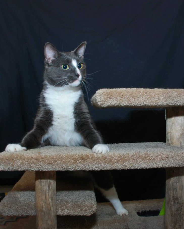 a specially, differently abled cat