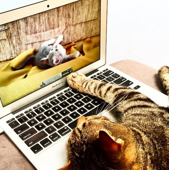 cat watching kitten videos