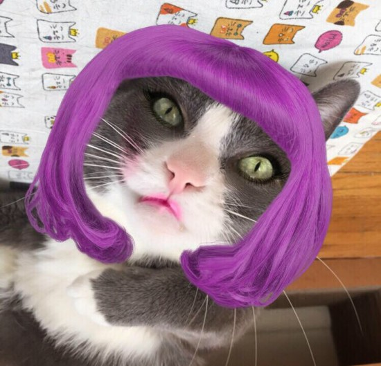 cat wearing wig and make up using a smartphone app
