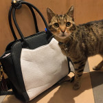 cat bag with cat in new york city