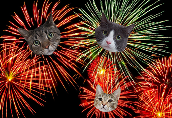 your cat friends on the fourth of july