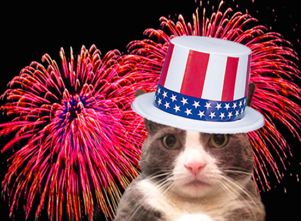 cat on 4th of July