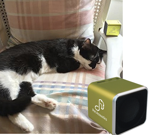 Calming music for cats