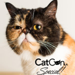 MeowQuarterly Special Issue
