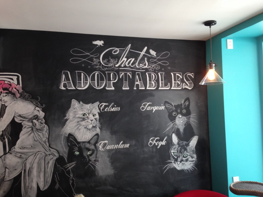Cat cafe in montreal