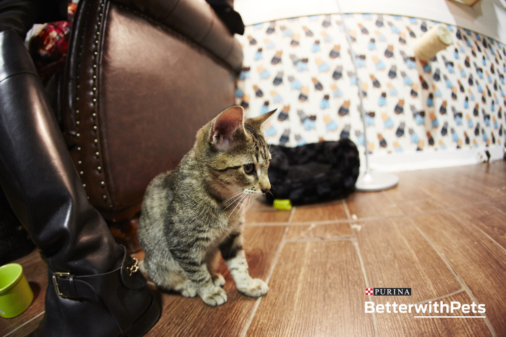 Kitten Purina Better With Pets Summit