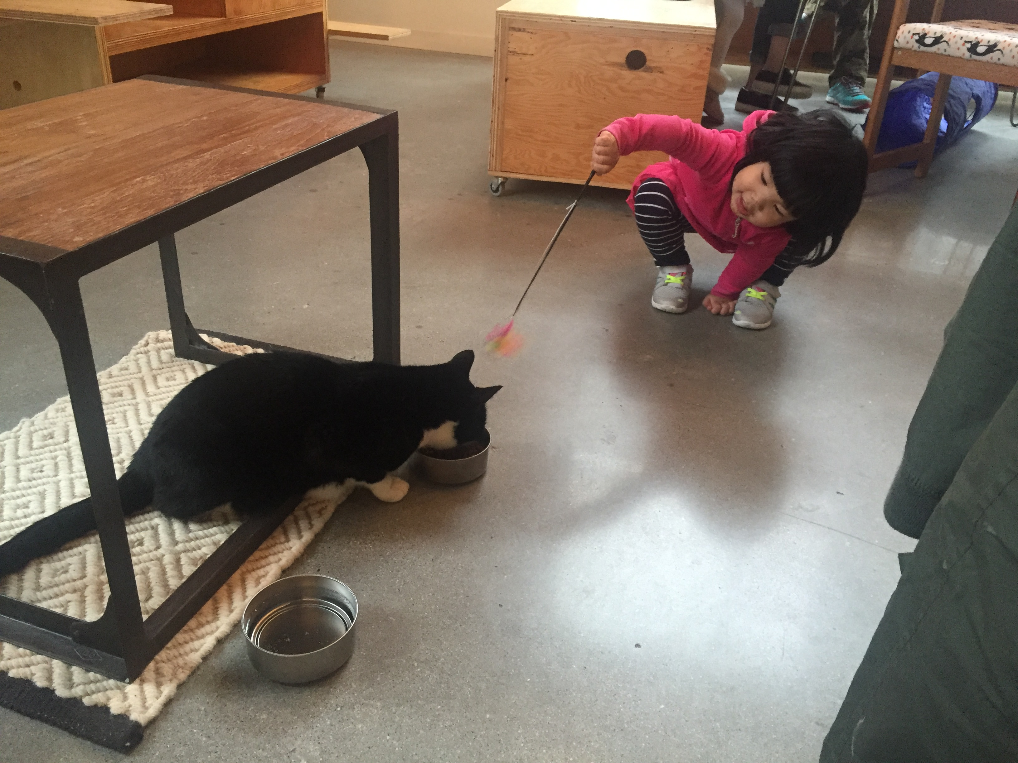 Vancouver's First Cat Cafe