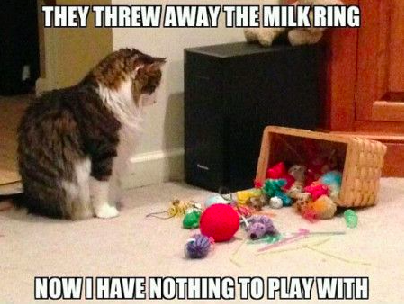 milk rings and cats