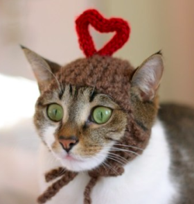 Cat with heart hat