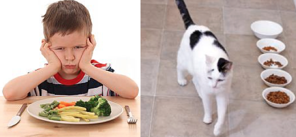Kids and Cats that won't clean their plates