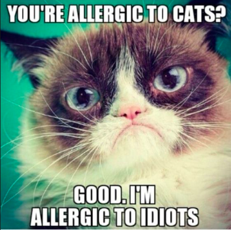 Grumpy Cat Allergic to Cats