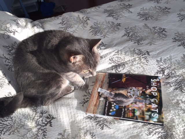 cats who read
