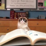 Grumpy Cat reading