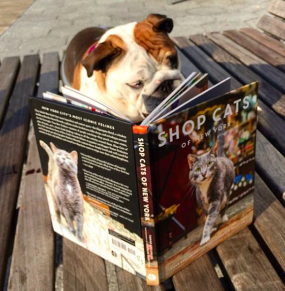 dog who reads, dog loves cats