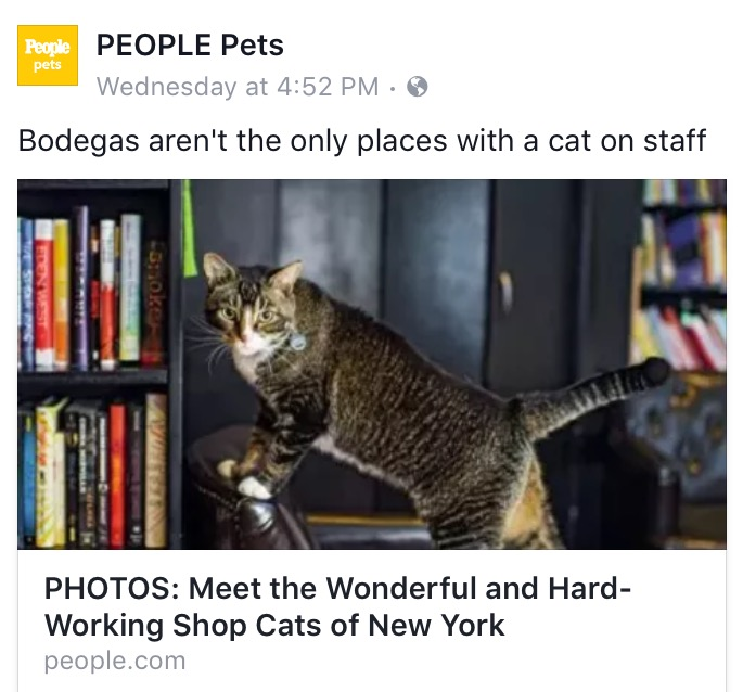 SHOP CATS OF NEW YORK peoplepets.com book review