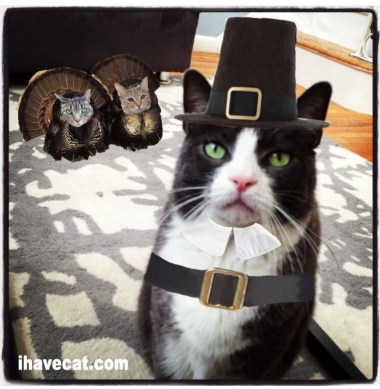 Pilgrim cat cat turkey