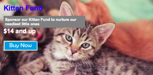 You can Sponsor a Cat as a gift from Tabby's Place