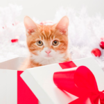 cat as a gift
