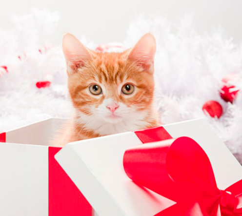 Kitten as a holiday gift