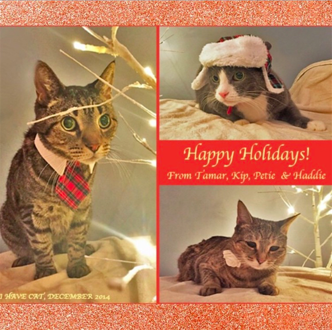 I HAVE CAT Christmas Card