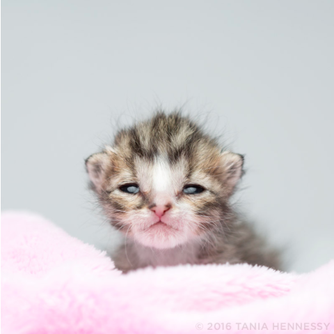 Jellybean was one of countless abandoned kittens who didn't make it, despite round-the-clock-care.