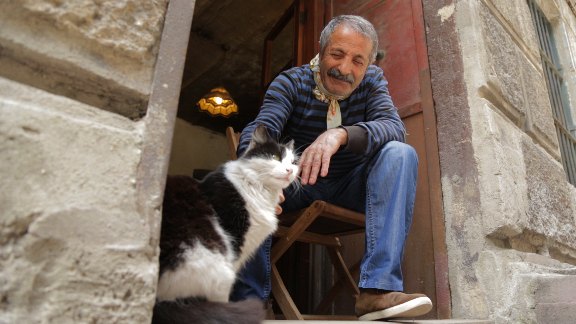 kedi  more than a film about cats in istanbul