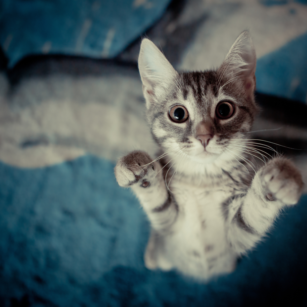 5 Things Cats Know About Life That We Should Learn   I ...